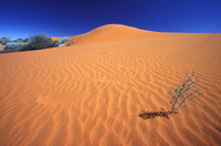 Sand and Life, Kalahari Desert, South Africa 2001